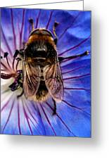 Resting Bee Greeting Card