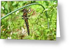 Resting Brown Dragonfly Greeting Card