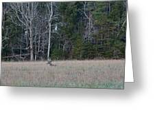 Resting Buck Greeting Card