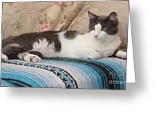 Resting Cat Greeting Card