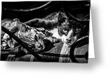 Resting Cats Greeting Card