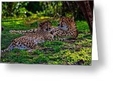 Resting Cheetahs Greeting Card