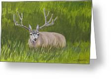 Resting Deer Greeting Card