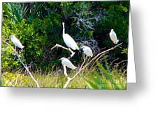 Resting Flock I Greeting Card