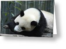 Resting Giant Panda Bear Greeting Card