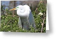Resting Great Egret Greeting Card