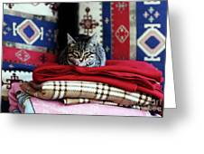 Resting In Istanbul Greeting Card