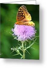 Resting On A Thistle Greeting Card