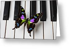 Resting On The Piano Greeting Card by Garry Gay