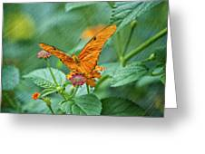 Resting Orange Butterfly Greeting Card