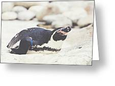 Resting Penguin Greeting Card