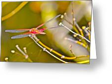 Resting Red Dragonfly Greeting Card