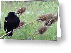 Resting Red-winged Blackbird  Greeting Card