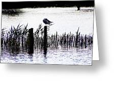 Resting Seagull  Greeting Card