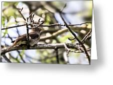Resting Singer  By Leif Sohlman Greeting Card