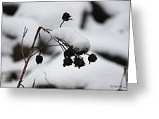 Resting Snow Greeting Card