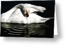 Resting Swan Greeting Card