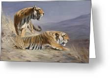 Resting Tigers Greeting Card