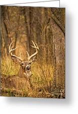 Resting White-tailed Deer Buck Greeting Card
