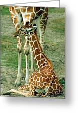 Reticulated Giraffe And Calf Greeting Card