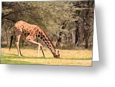 Reticulated Giraffe Drinking At Waterhole Kenya Greeting Card