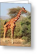 Reticulated Giraffe Greeting Card