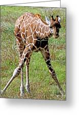 Reticulated Giraffe Greeting Card