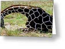 Reticulated Giraffe On Ground Greeting Card