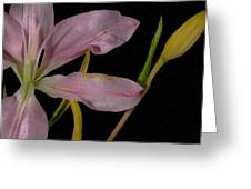 Retiring Lily Greeting Card