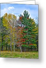Retreating Pines Greeting Card