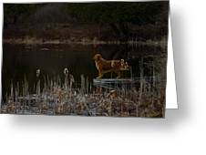 Retriever Focus Greeting Card