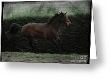 Retro Horse Greeting Card