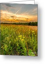 Retzer Wildflower Sunset Greeting Card