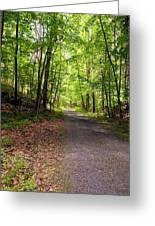 Wooded Path 12 Greeting Card
