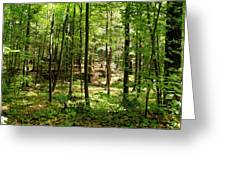 Wooded Path 13 Greeting Card