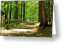 Wooded Path 15 Greeting Card