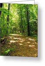 Wooded Path 16 Greeting Card