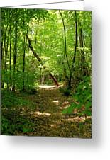Wooded Path 17 Greeting Card