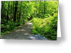 Wooded Path 20 Greeting Card