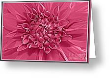 Rhapsody In Pink Greeting Card