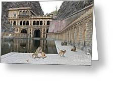 Rhesus Monkeys At An Indian Temple Greeting Card