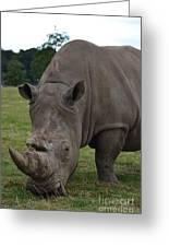 Rhino 2 Greeting Card