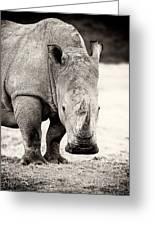 Rhino After The Rain Greeting Card by Mike Gaudaur