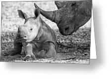 Rhino And Baby Greeting Card