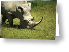 Rhino Covered In Flies Greeting Card