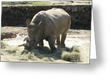Rhino Eating Greeting Card