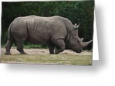 Rhino In The Wild Greeting Card