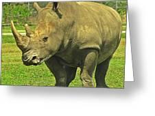 Rhino Look Greeting Card
