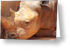 Rhino Naptime Greeting Card