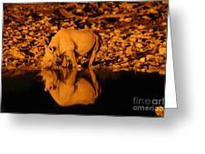 Rhino Reflection Greeting Card